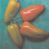 Перец сладкий, сорт Подарок Молдовы