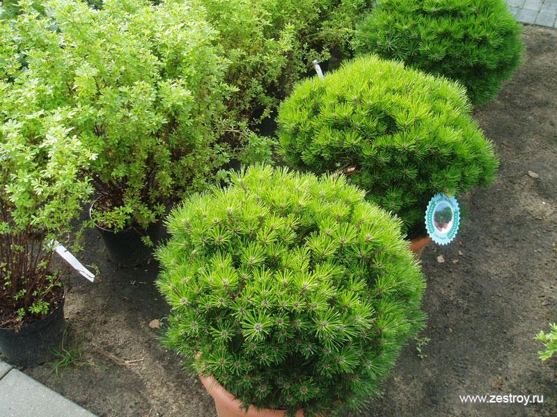 Растения и деревья в настоящее время