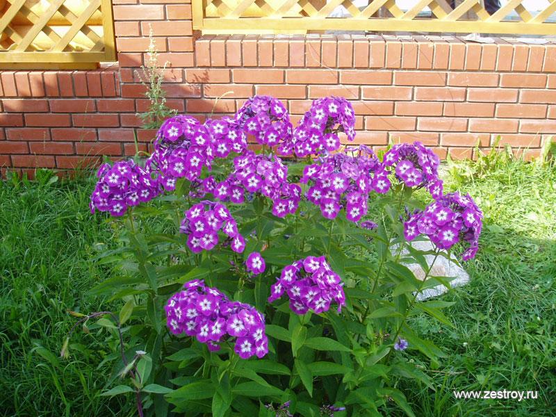 смс открытки: pictures11.ru/sms-otkrytki.html