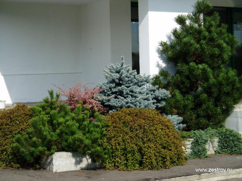 Декоративные растения и деревья для
